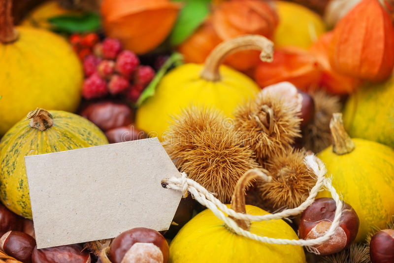 Autumn fruits, label on decoration stock photos