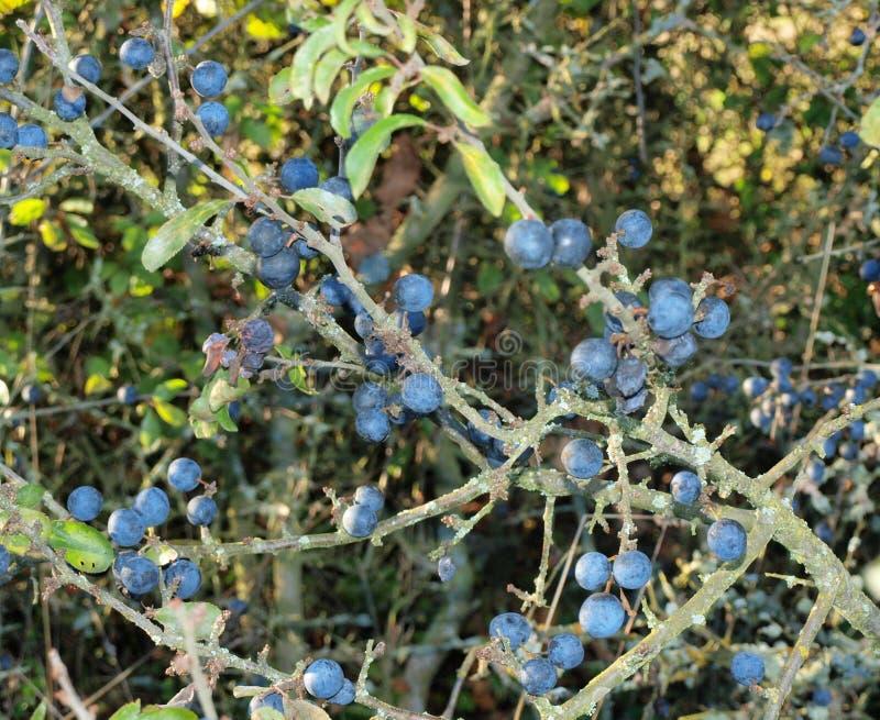 Download Autumn Fruits, Southern Bohemia Stock Image - Image: 46181333