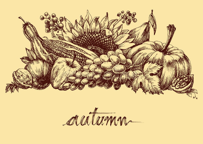 Autumn fruits and vegetables. Abundance. Fall background hand drawing royalty free illustration