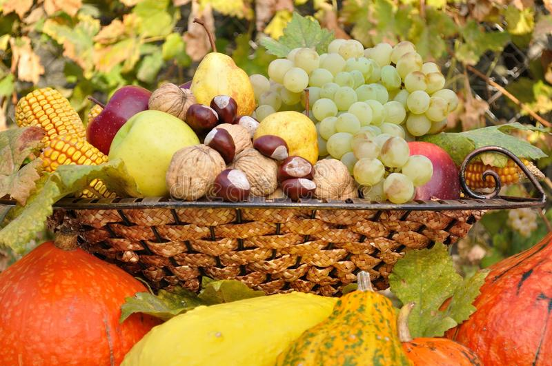 Autumn fruits and vegetables decorative composed in dish royalty free stock photography