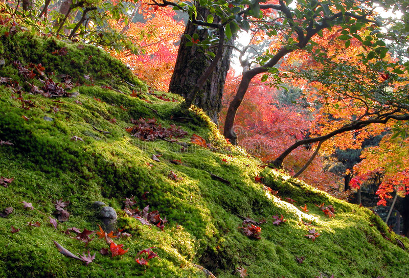 Download Autumn garden stock photo. Image of landscape, leaves, outdoor - 113718