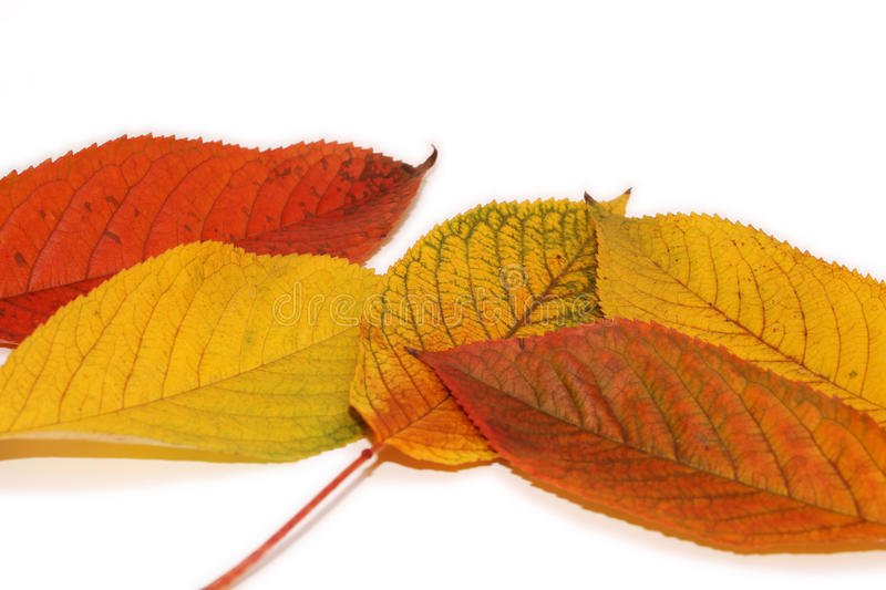 Download Autumn Garden stock image. Image of abstract, nature - 22009029
