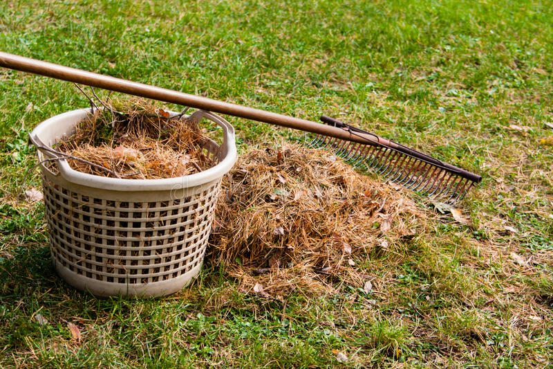 Download Autumn in garden stock photo. Image of grass, season - 29405112