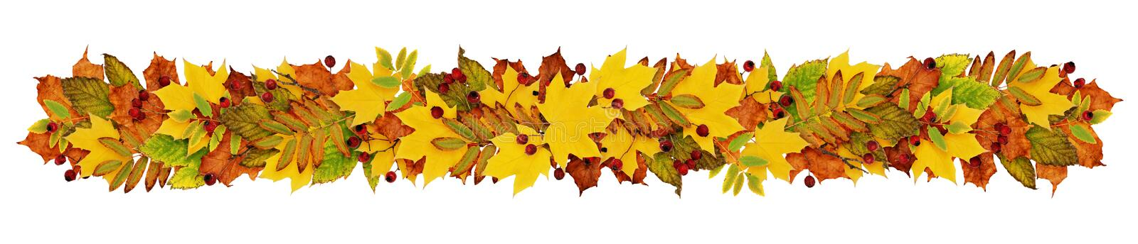 Autumn garland fron colorful leaves and berries stock illustration