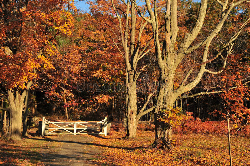Download Autumn Gate Landscape stock image. Image of environment - 27277321
