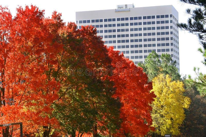 Autumn in Georgia stock image