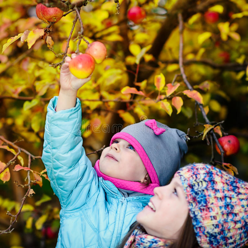Autumn girl picking apple from tree stock photography