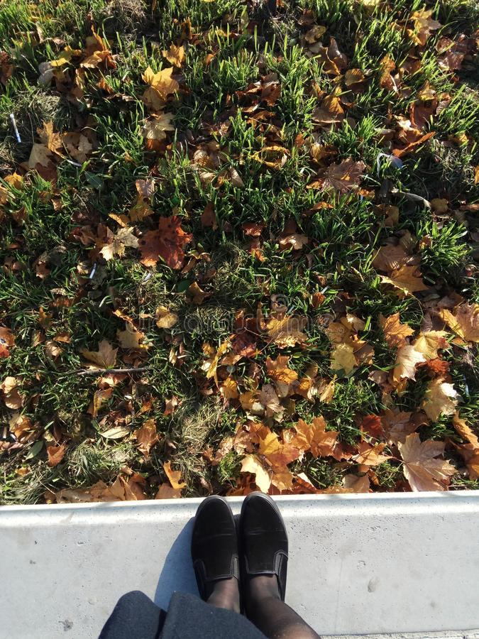 autumn grass shoes girl royalty free stock photo