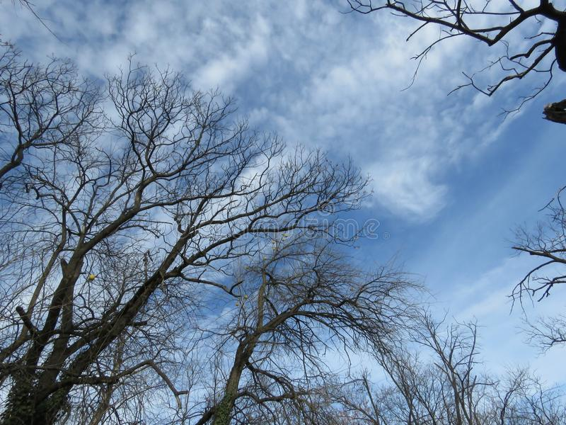 Autumn gloomy sky and leafless trees. Autumn winter weather forecast concept. Autumn. Blue Gloomy Sky, Fluffy White Clouds, Bare Leafless Trees in the Park royalty free stock images