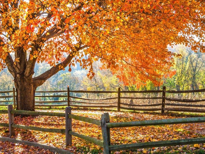 Autumn Glow royalty-vrije stock afbeelding