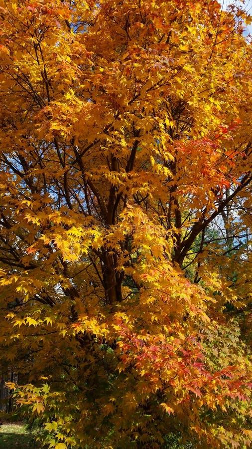 Autumn Gold royalty-vrije stock afbeelding