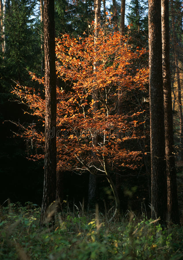 Download Autumn gold creations stock image. Image of outdoors - 19993291