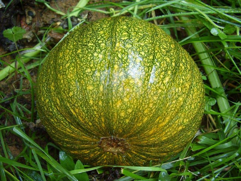 Autumn Gold Pumpkin Stock Photography