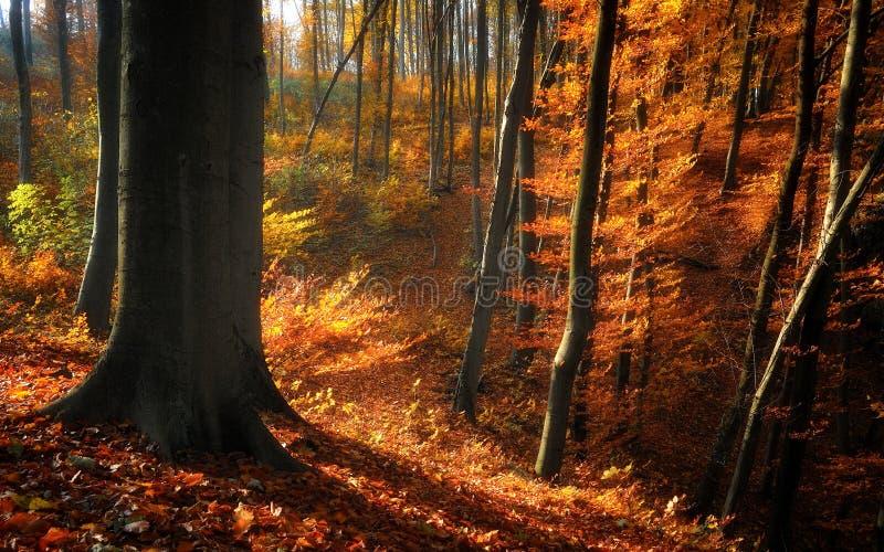 Autumn forest trees stock photos