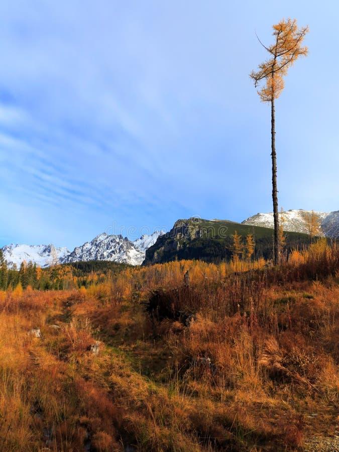Autumn Golden Grass Meadow con la camiseta alta secada Montañas Nevado en el fondo Cielo azul fotografía de archivo libre de regalías