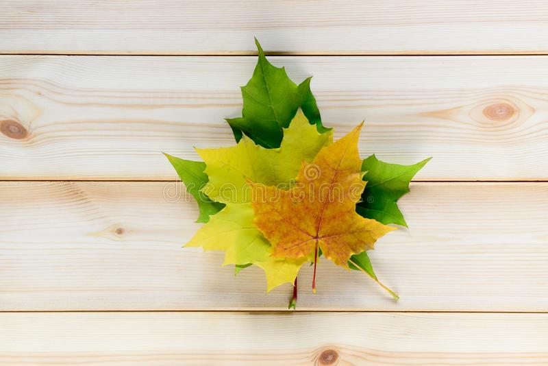 Autumn golden orange, yellow and green leaves in heap on natural wooden table royalty free stock photos