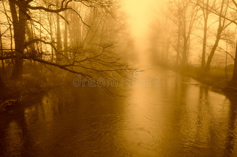 Autumn golden tree royalty free stock photography