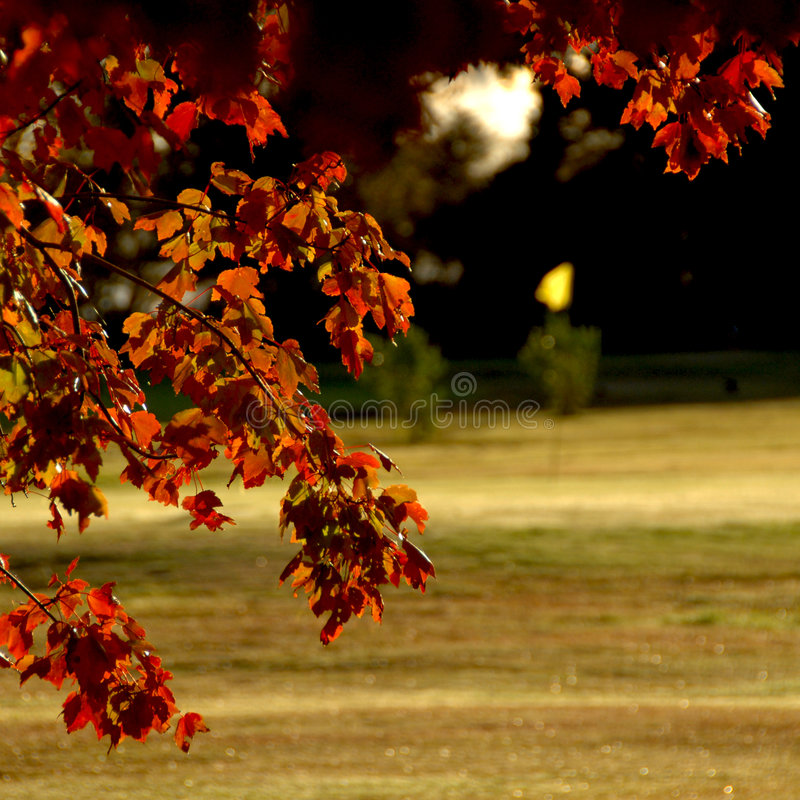 Autumn on Golf Course royalty free stock images