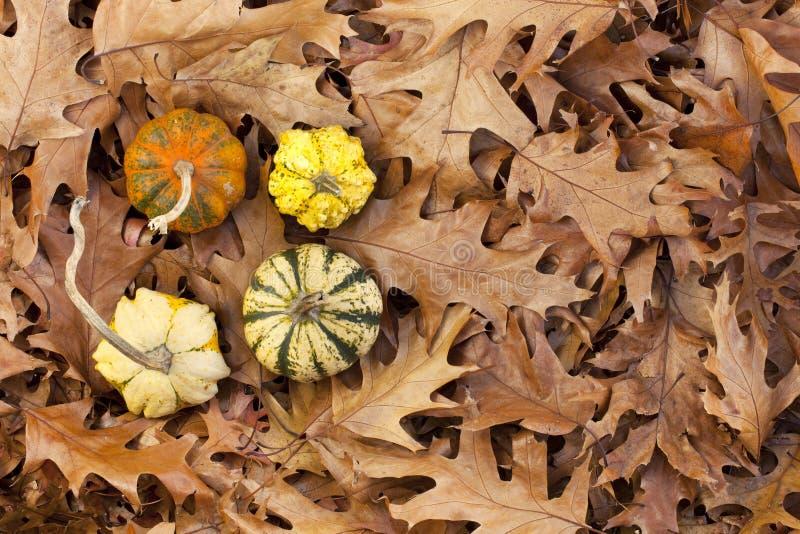 Autumn Gourds royalty free stock image