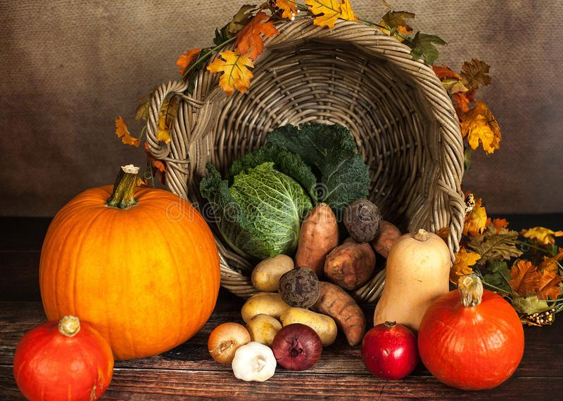 Autumn gourds still life royalty free stock photos