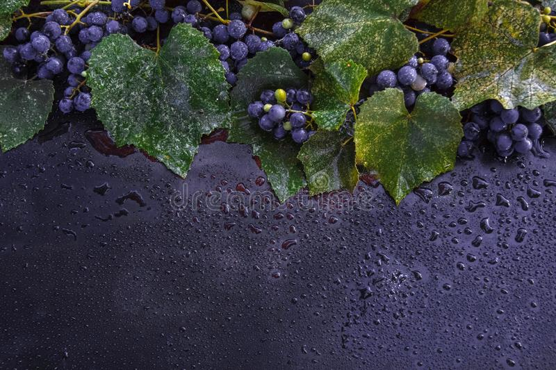 Autumn grape dew royalty free stock images