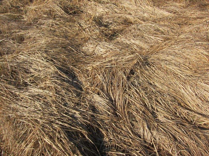 Autumn grass royalty free stock image