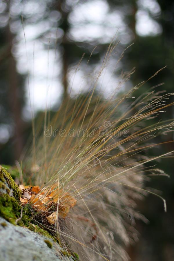 Autumn grass and dry leaves on a forest background. Blurred background. Moss on the rocks stock image
