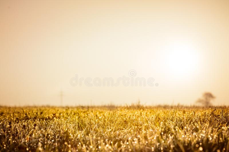 Autumn grass field, golden nature abstract background concept, soft focus, bokeh, warm tones.  royalty free stock images