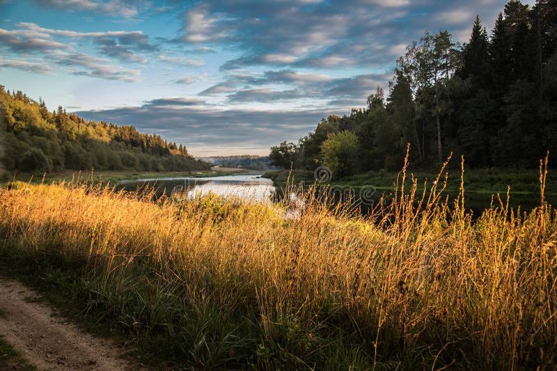 Autumn grass near the river lit by the setting sun royalty free stock photo