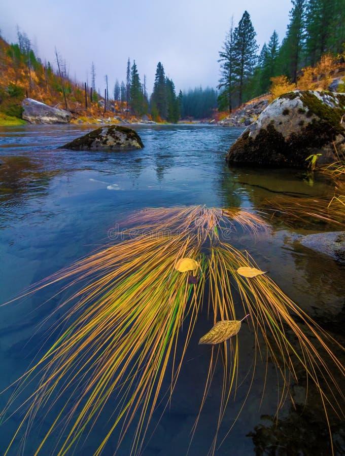 Autumn Grass på den Wenatchee floden, Washington State royaltyfria foton