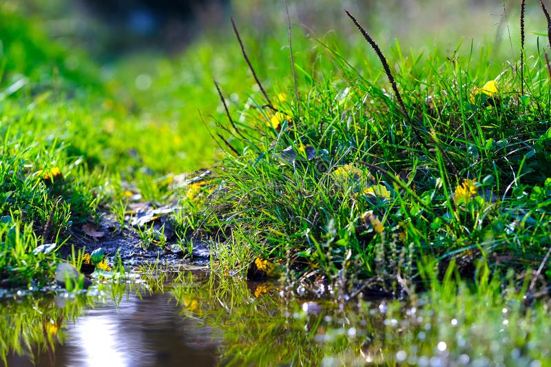 Autumn grass at puddle. High quality large size photo of grass near puddle, close up view, true natural juicy colors, good composition. Image shows almost macro stock photos