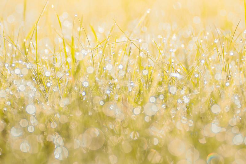 Autumn grass in sunset sunlight. Green yellow orange abstract nature blurred background. Macro, bokeh. royalty free stock photo