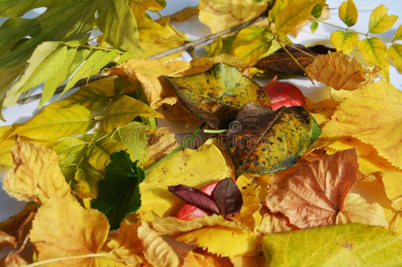 Autumn green brown yellow vivid colorful leaves. Winter natural image, close up stock photo