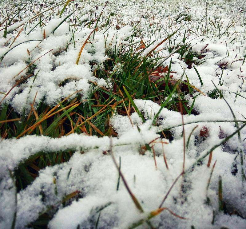 Green grass under snow royalty free stock image