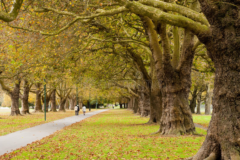 Autumn in Hagley Park, Christchurch, New Zealand stock image
