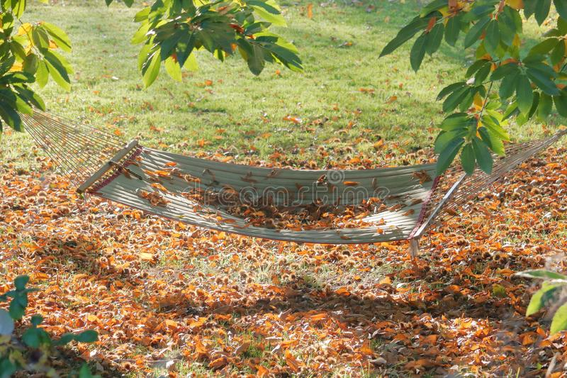 Autumn Hammock in Backyard. A hammock is surrounded by autumn leaves beneath trees in a back yard stock image