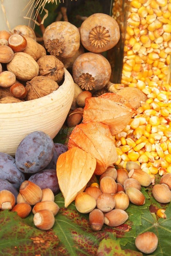 Download Autumn harvest stock image. Image of maize, poppyseeds - 15922507