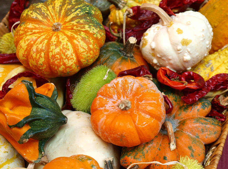 Autumn harvest. Mixed autumn vegetable harvest in a basket, Italy stock photography