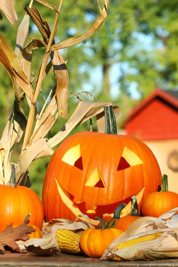 Free Autumn Harvest Royalty Free Stock Image - 3203766