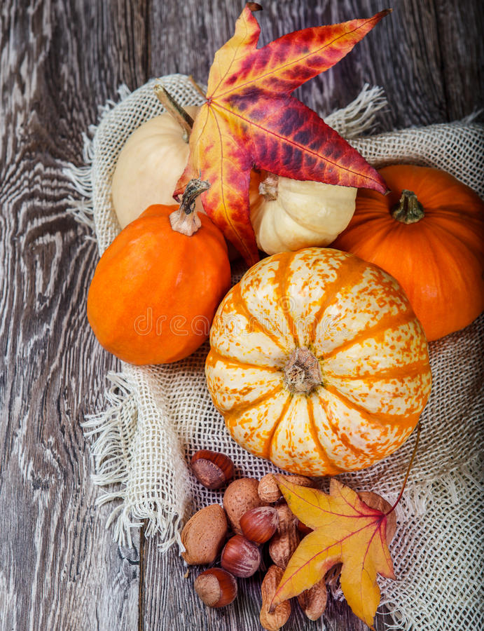 Autumn Harvest lizenzfreie stockfotos