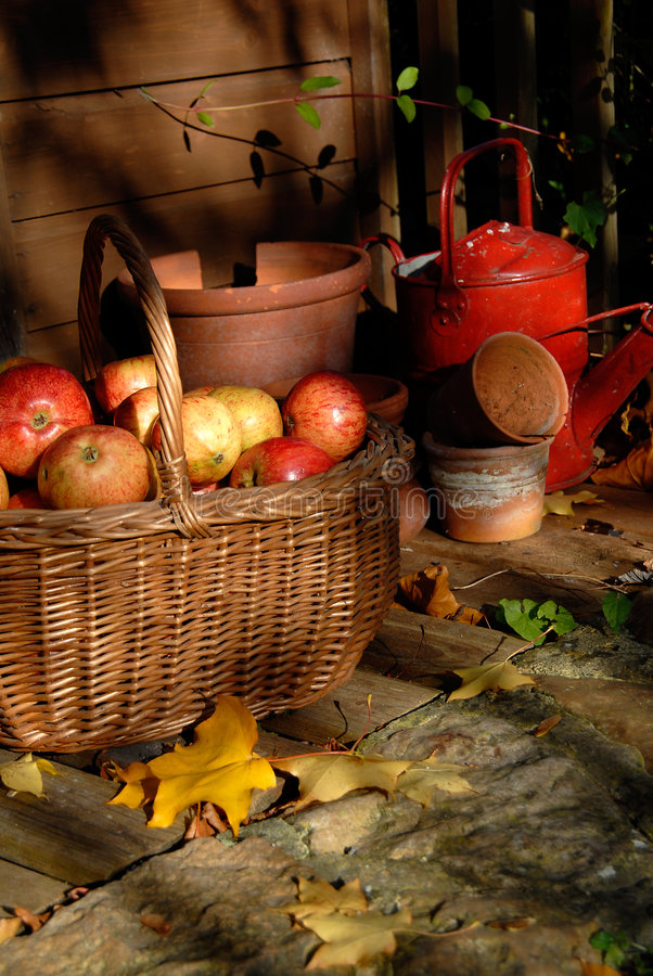 Download Autumn Harvest. stock photo. Image of collection, giving - 6800898