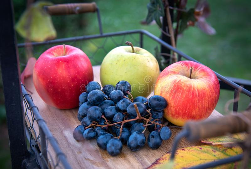 Autumn harvest. Apple, grapes and yellow leaves on the wooden tray, outdoor royalty free stock images