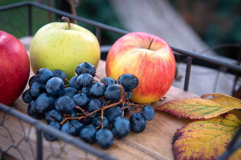 Autumn harvest. Apple, grapes and yellow leaves on the wooden tray, outdoor royalty free stock image