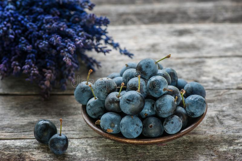 Autumn harvest blue sloe berries on a wooden table with a bouquet of lavender in the background. Copy space. Rustic style. royalty free stock photos
