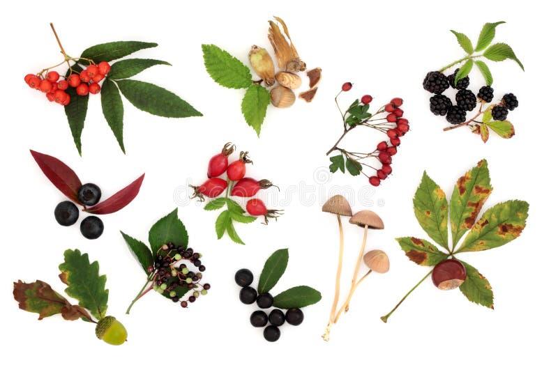 Autumn Harvest Collection stock photos