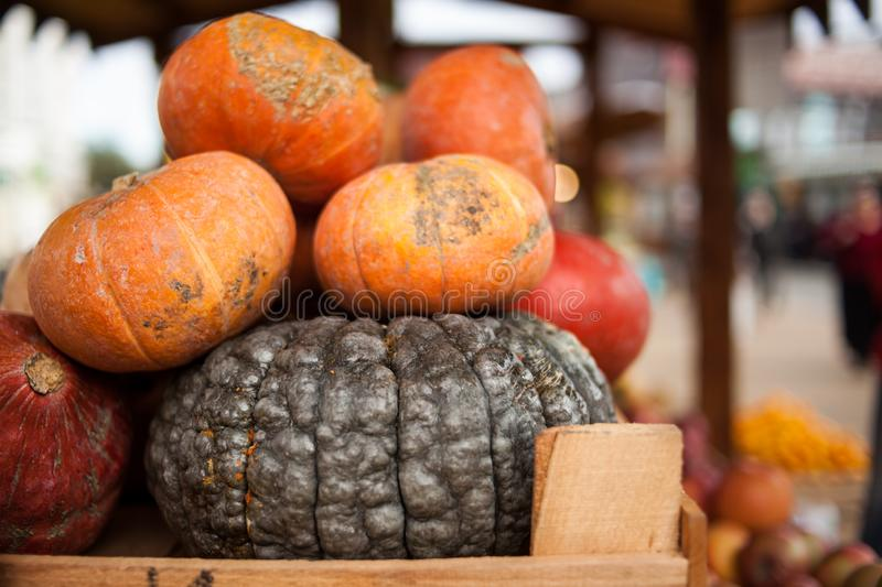 Autumn harvest colorful squashes and pumpkins in different varieties royalty free stock photos