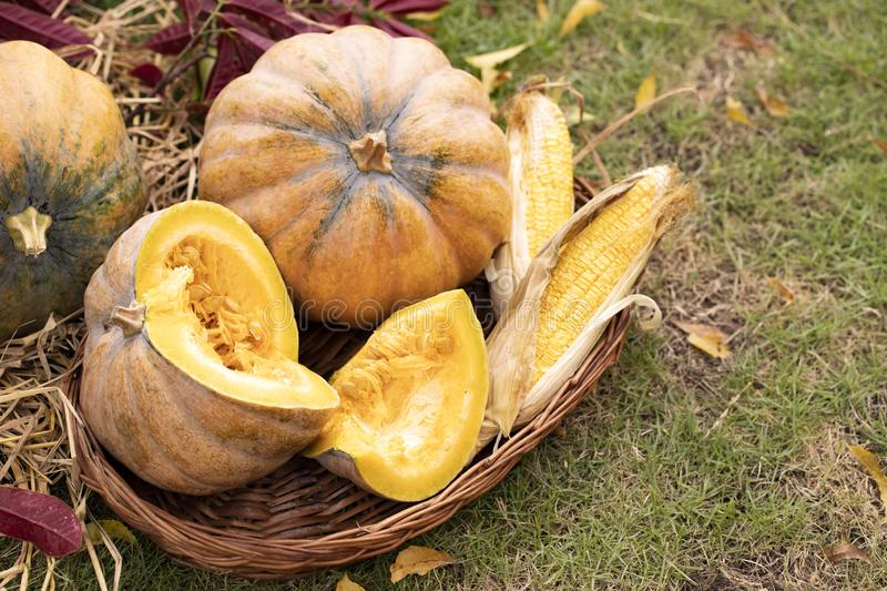 Autumn harvest concept. Thanksgiving Greetings. Autumn composition with ripe pumpkins, corn in a wicker basket. Rustic royalty free stock photos