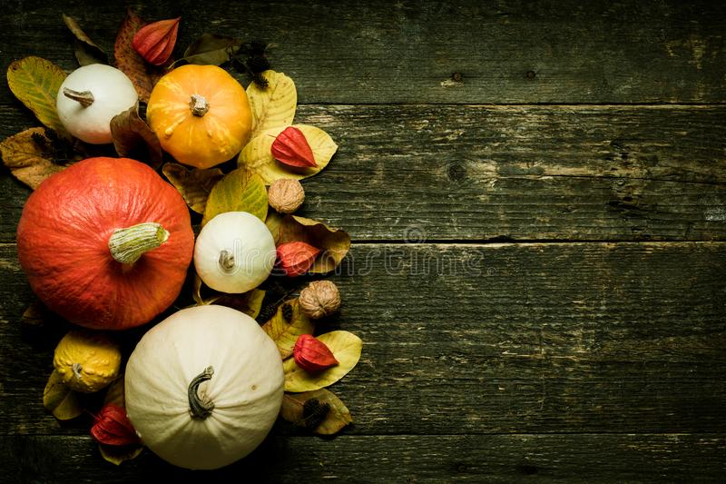Autumn Harvest and Holiday still life. Happy Thanksgiving Background. Selection of various pumpkins on dark wooden background. stock images