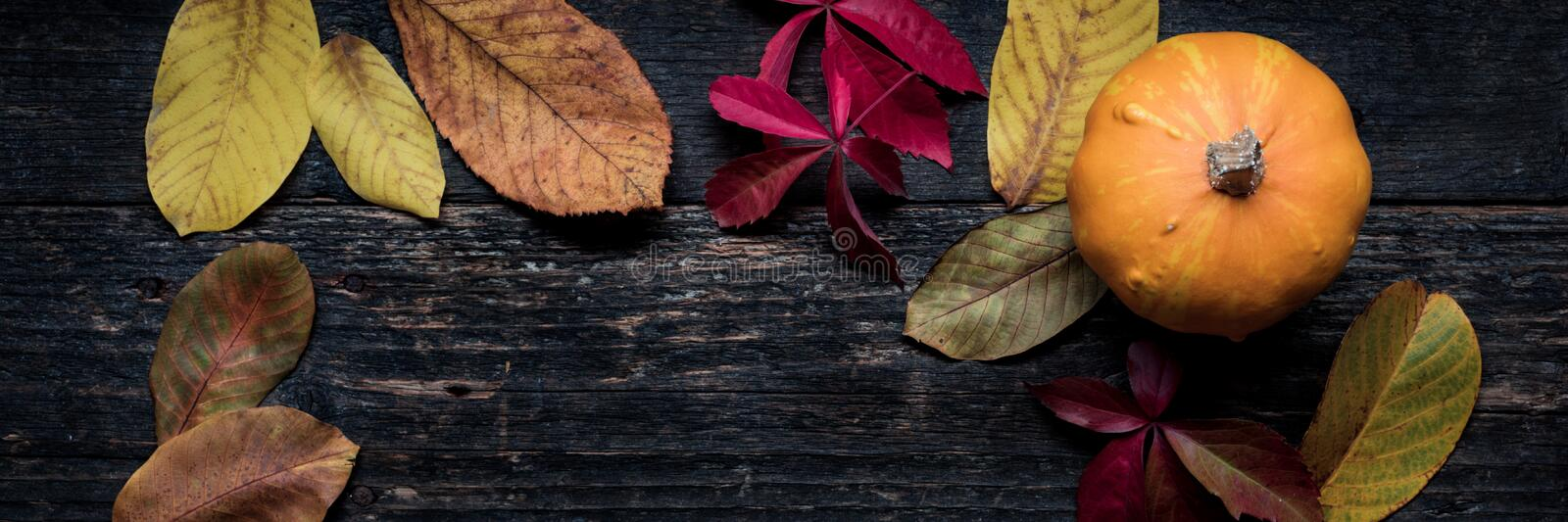 Autumn Harvest and Holiday still life. Happy Thanksgiving Banner. Pumpkin and fallen leaves on dark wooden background. Autumn vegetables and seasonal royalty free stock image