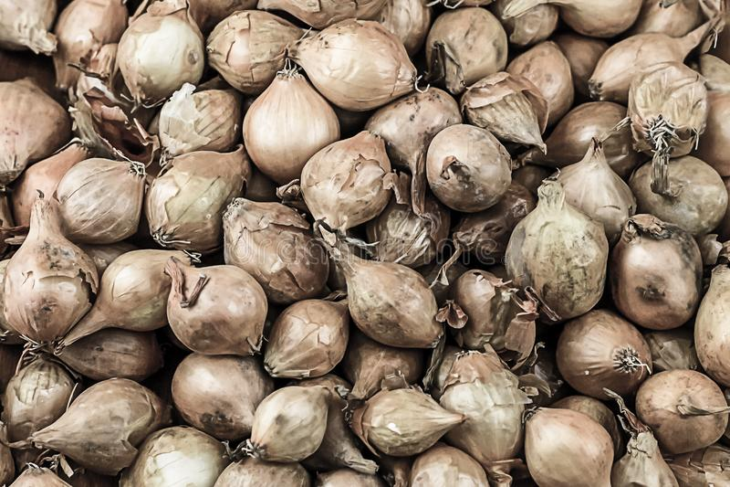 Autumn harvest many whole onions vegetable pattern background natural fresh fruit base farmer base stock images